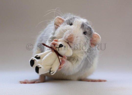 Как правильно выбрать и купить мышку для ПК