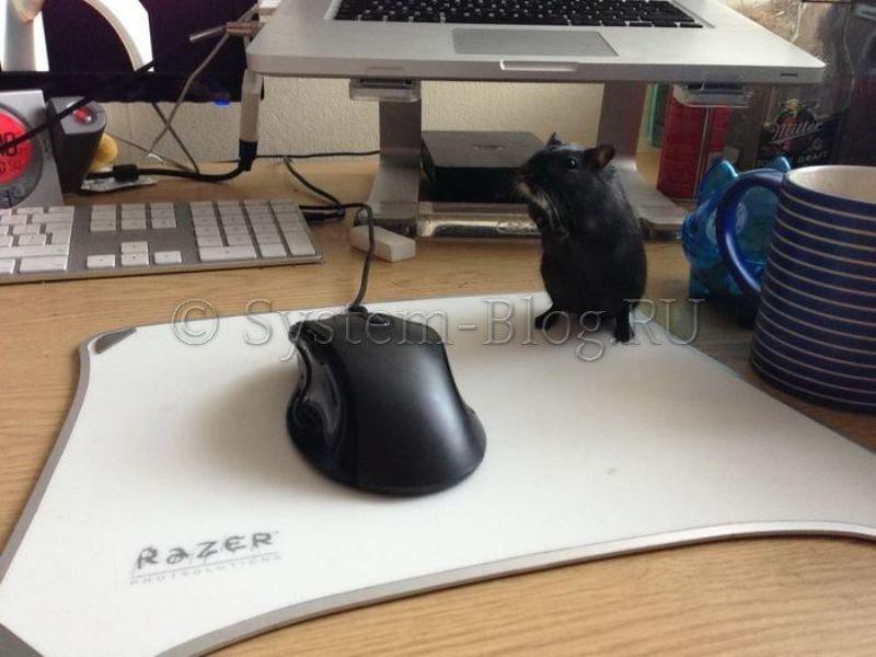 Как работать клавиатурой без мышки. Инструкция для Windows 7