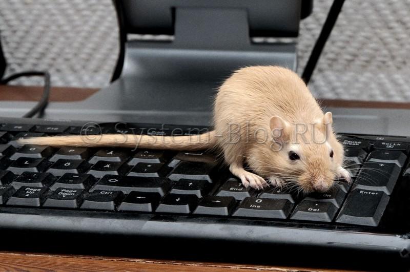 Как подключить клавиатуру и мышь к компьютеру или ноутбуку, через PS/2, USB или по Bluetooth
