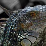 Проект Reptilicus.net: многофункциональный логер для Android